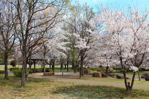 身馴川公園4